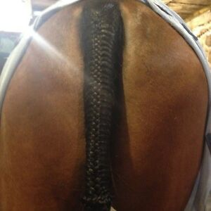 Clipping and Braiding Services  London Ontario image 6