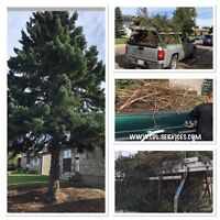 NEED TREE SERVICE? | AFFORDABLE RATES. FREE QUOTE