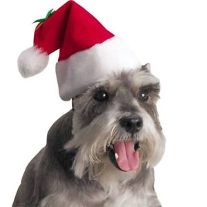 Want your dog smile ready for Santa?