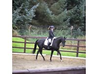 Talented gelding for full loan