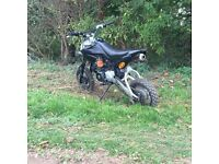 125cc lifan pit bike