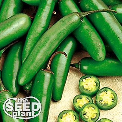 Serrano Chili Pepper Seeds - 100 SEEDS-SAME DAY SHIPPING Pepper 100 Seeds