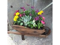 Wheelbarrow Planter - Free delivery Stoke on Trent