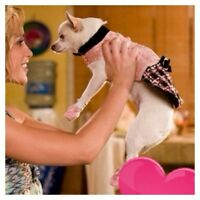 ♥♡♥dog boarding/daycare for dogs all sizes/cage free/dog sitter