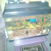 25 gal and convict cichlidspick up in hearstabout 20 fish