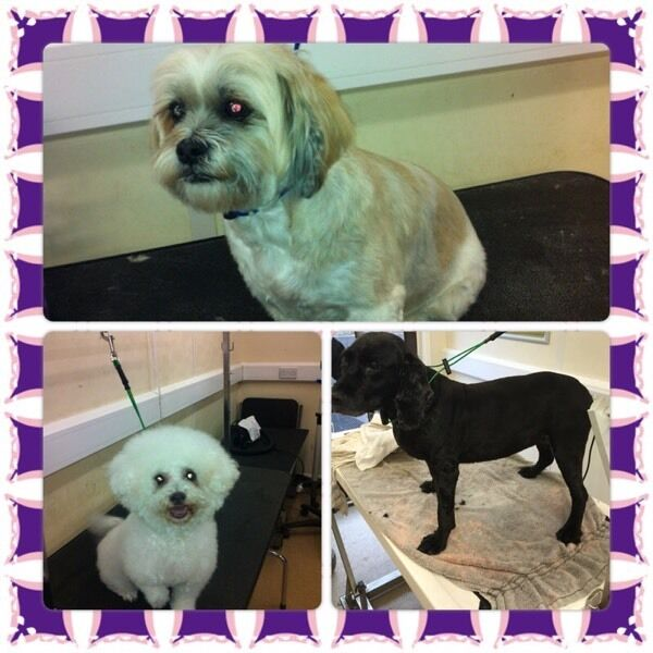 Ash S Woof Cut S Mobile Dog Grooming In Sunderland Tyne And Wear