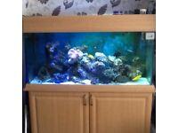 Marine aquarium full set up inc live stock