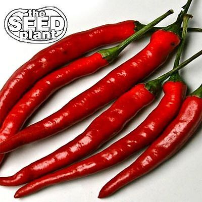Cayenne Long Slim Pepper Seeds - 100 SEEDS-SAME DAY SHIPPING Pepper 100 Seeds