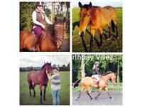 Horse for share / part or full loan