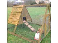 Henny Penny and her home