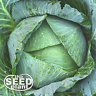 All Seasons Cabbage Seeds - 250 SEEDS - SAME DAY SHIPPING