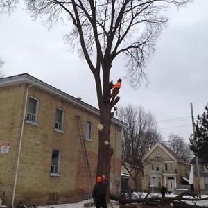 Tree removal services  London Ontario image 8