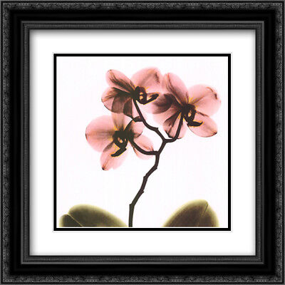 Crystal Flowers X-Ray, Orchid 2x Matted 16x16 Framed Art by Albert Koetsier