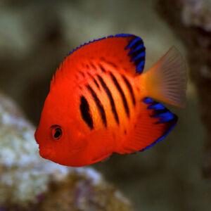 New Saltwater Fish