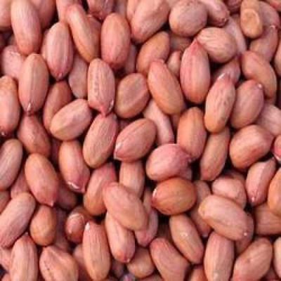 AIVA - Raw Spanish Peanuts 10 lb