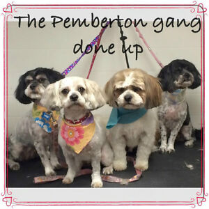Pawz Above the Rest Dog Grooming Xmas opening available still London Ontario image 5