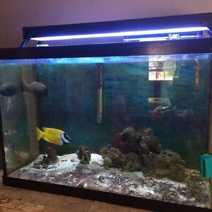 65 Gallon Salt Water Fishtank and Fish for sale
