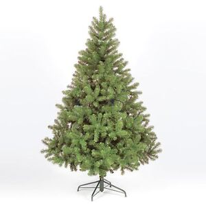 Colorado Spruce Christmas Xmas Tree 4ft 5ft 6ft 7ft or 8ft  Free Delivery
