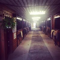 Horse Boarding Available at Beautiful Facility! Fantastic Care!