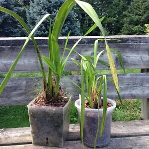 Orchid Plants for Sale London Ontario image 5