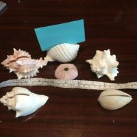Seashell assorted card holders
