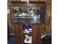 Juwel fishtank