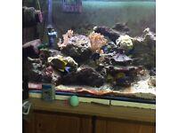 Marine aquarium (reduce price for quick sale)