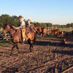 """Ranch horse """"Wrangler"""" Price Reduced"""
