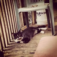 Missing cat - black and white - Parkdale area