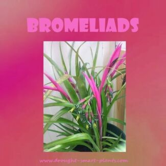 BROMILIAD PLANTS FOR SALE!