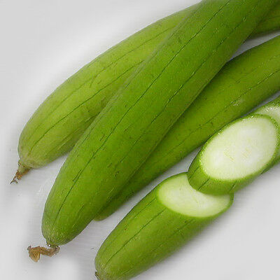 20   Asian Vegetable Edible Luffa Seeds   Long Smooth Sponge Gourd  Muop Huong