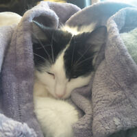 FREE: Adult Female Cat needs new home