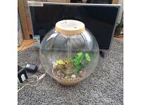 Large bi orb fish tank