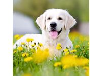 im looing for a lovely puppy for my sons birthday
