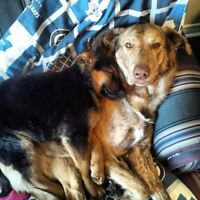 Long term dog care giver needed
