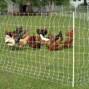 looking for Electric Fence Poultry Netting