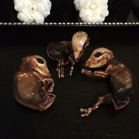 Real Taxidermy Mummified Fetal Pigs