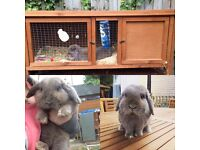 Lilac Buck and hutch for sale