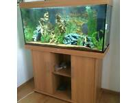 Juwel Rio 240 Aquarium Fish Tank Set-up