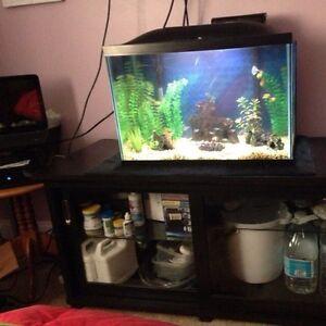 20 gallon fish tank set