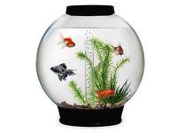Biorb 30 aquarium