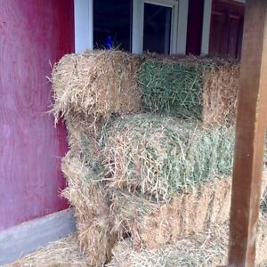 Hay for sale !!!