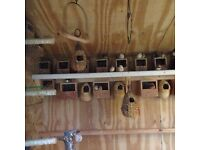 finch nest boxes