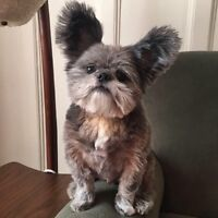 SMALL DOG WANTED ASAP