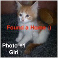 8 Week Old Rescue Kittens Need Beautiful Homes!