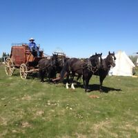 Driving horse and mule teams