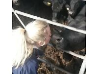 WANTED- Looking for dairy or general work work Launceston area