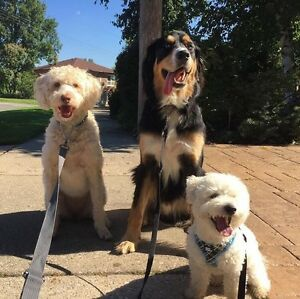 Professional and Reliable Pack Walks for Dogs Kitchener / Waterloo Kitchener Area image 3