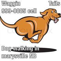 Dog walking in marysville