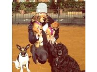 Experienced dog walker and pet care provider - West London
